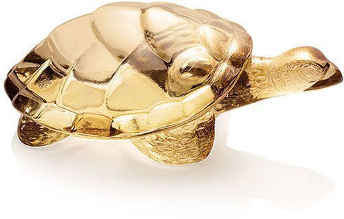 Caroline Turtle